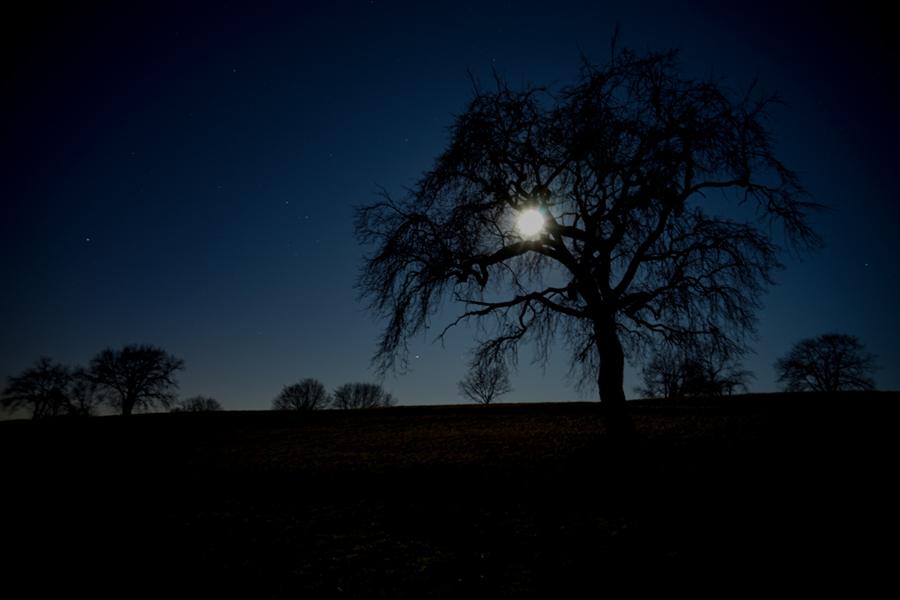 La luna del lupo