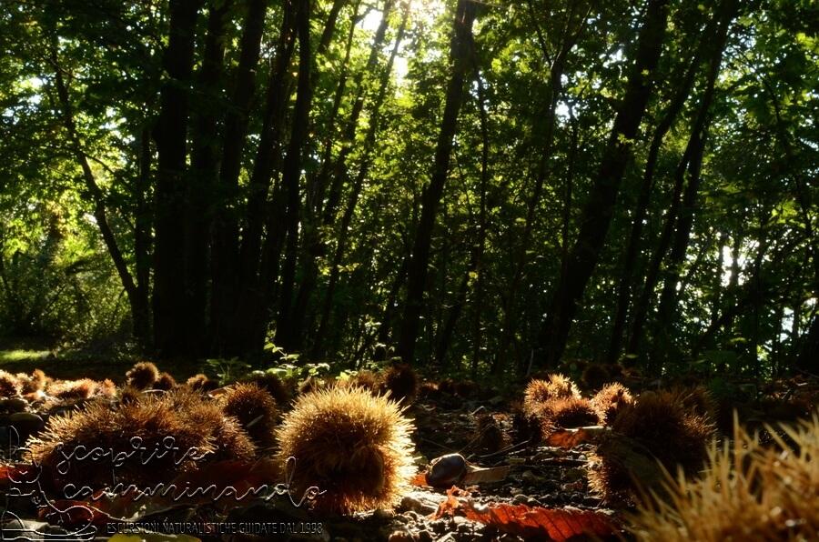 Tempi di castagne