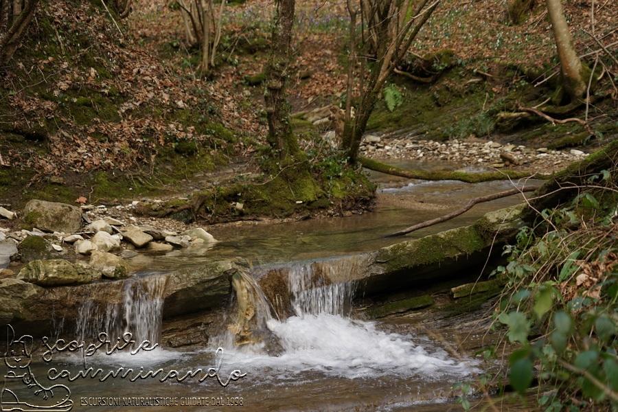 Il rio